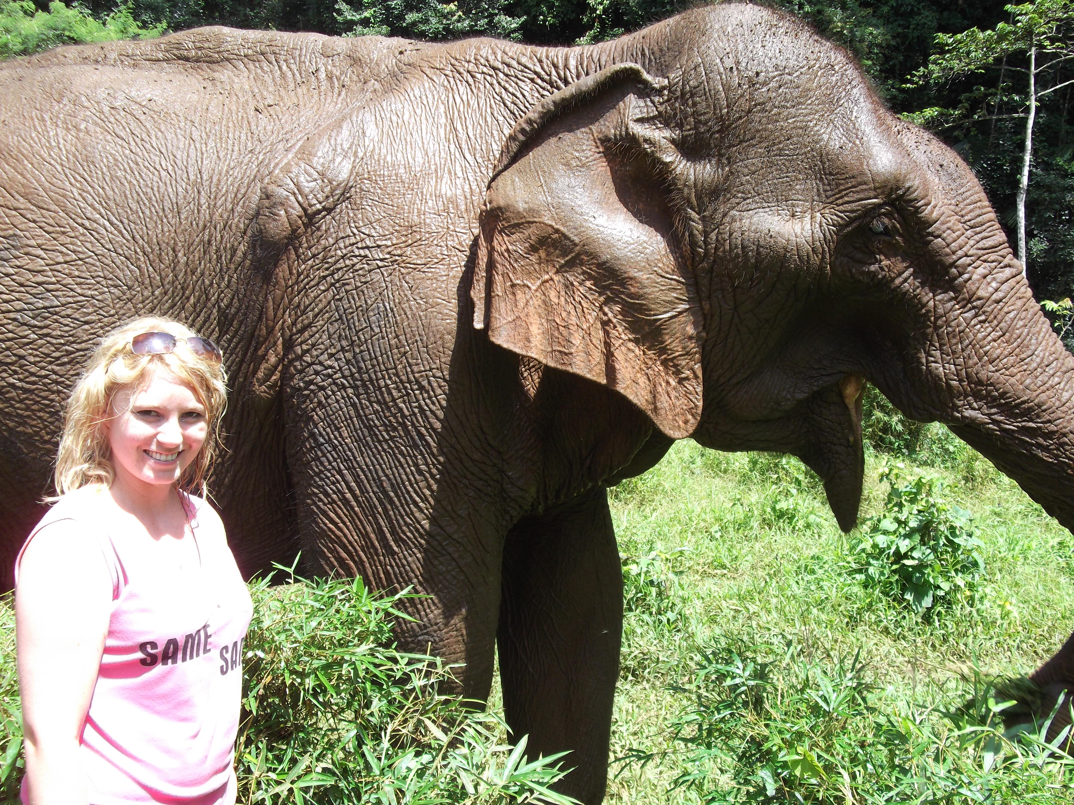 elephants open stories