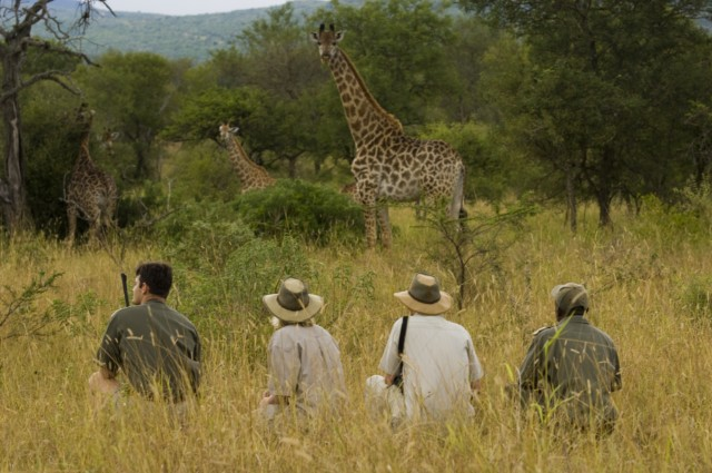 Pilanesberg-game-walk